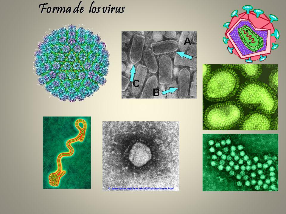 Forma de los virus