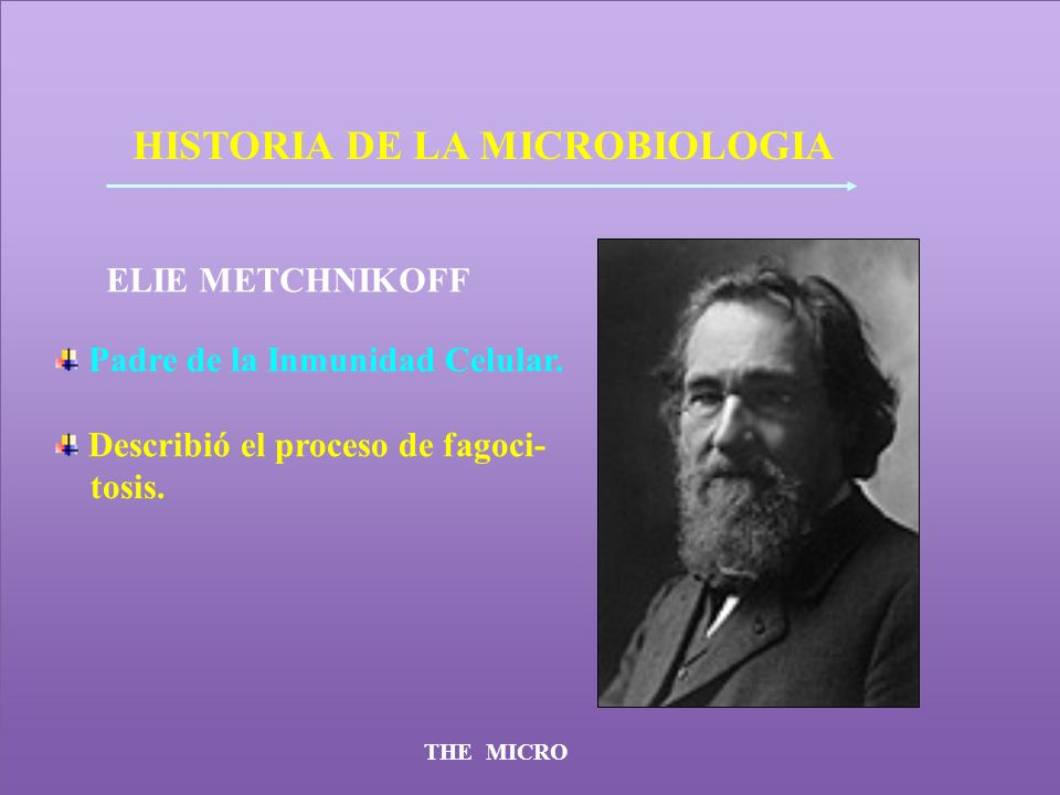 THE MICRO HISTORIA DE LA MICROBIOLOGIA ELIE METCHNIKOFF Padre de la Inmunidad Celular. Describió el proceso de fagoci- tosis.