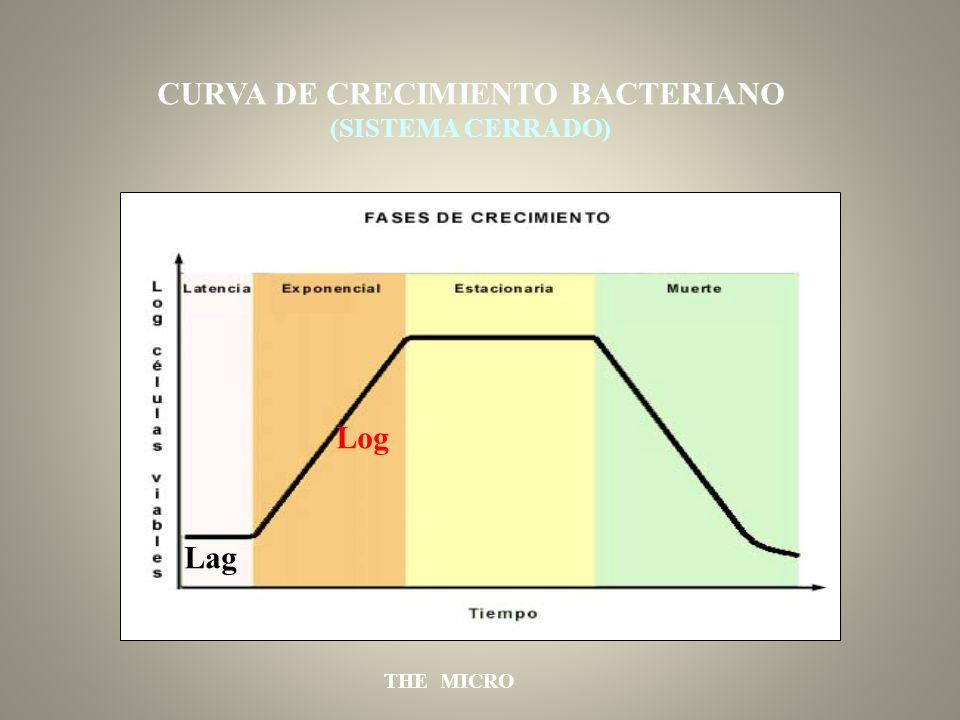 THE MICRO Lag Log CURVA DE CRECIMIENTO BACTERIANO (SISTEMA CERRADO)