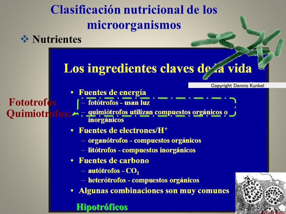 Nutrientes Hipotróficos Quimiotrofos: Fototrofos Clasificación nutricional de los microorganismos