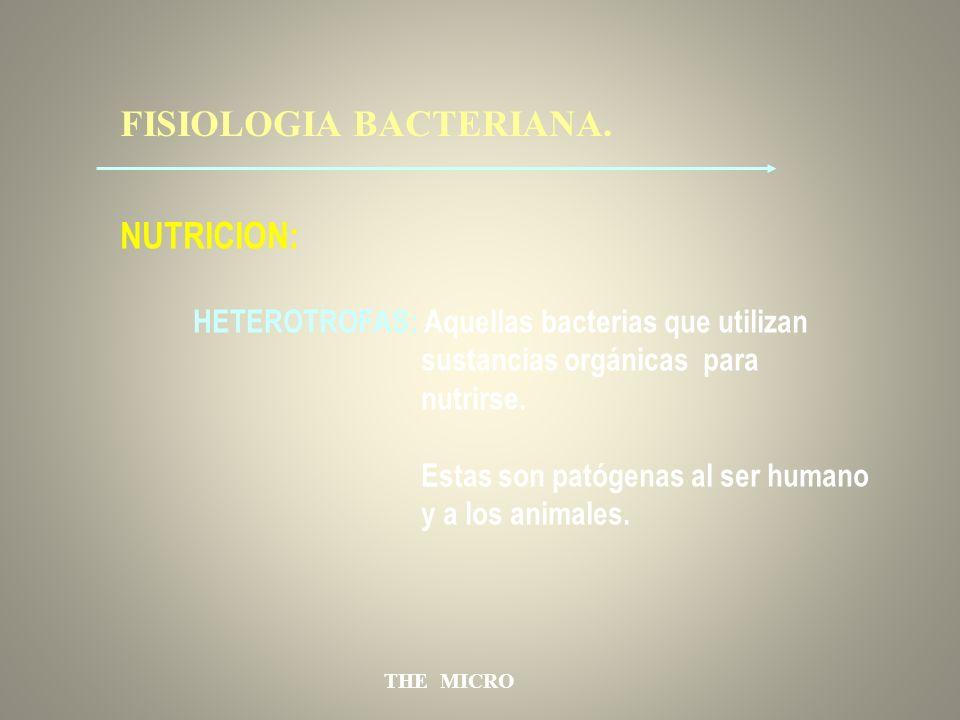 THE MICRO FISIOLOGIA BACTERIANA. NUTRICION: HETEROTROFAS: Aquellas bacterias que utilizan sustancias orgánicas para nutrirse. Estas son patógenas al s