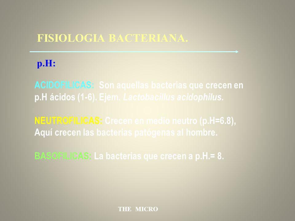 THE MICRO FISIOLOGIA BACTERIANA. ACIDOFILICAS: Son aquellas bacterias que crecen en p.H ácidos (1-6). Ejem. Lactobacillus acidophilus. NEUTROFILICAS: