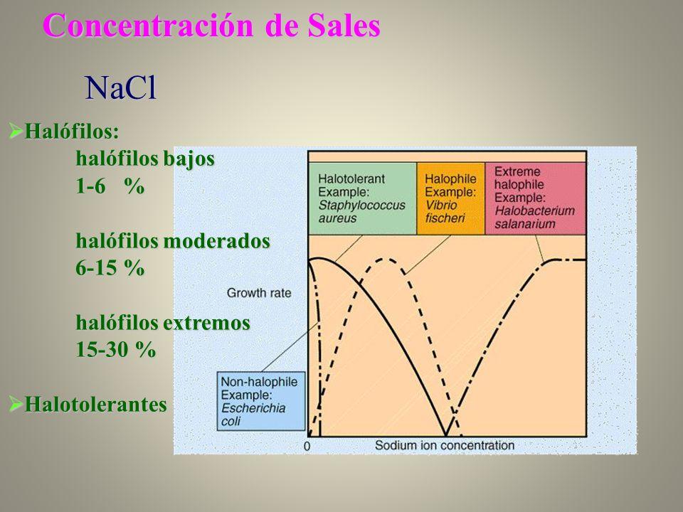 Concentración de Sales NaCl Halófilos: Halófilos: halófilos bajos 1-6 % halófilos moderados 6-15 % halófilos extremos 15-30 % Halotolerantes Halotoler