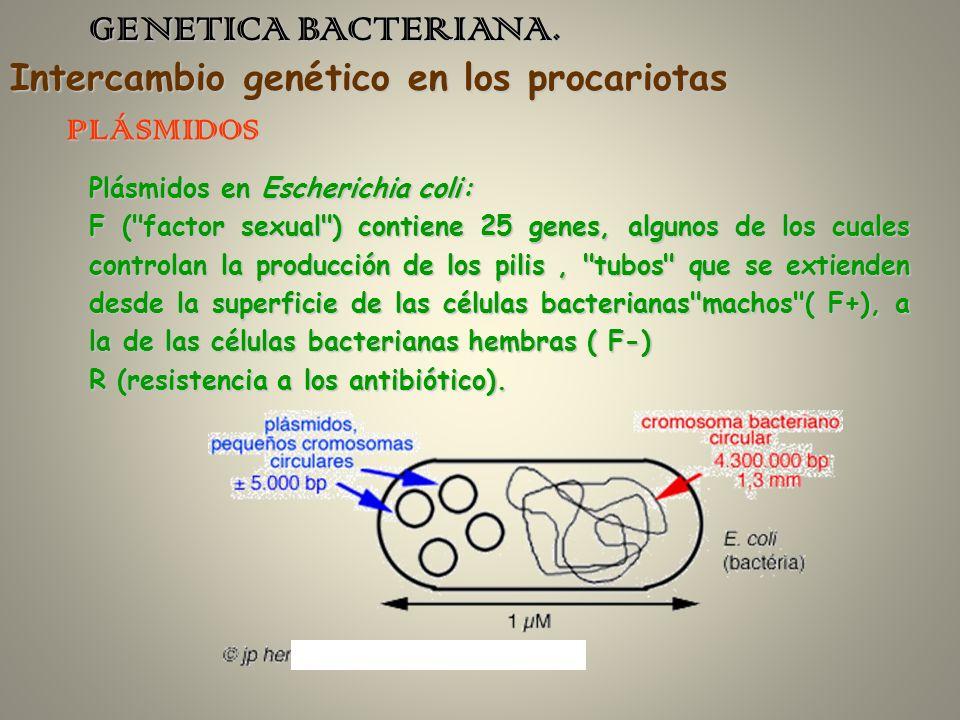 GENETICA BACTERIANA. PLÁSMIDOS Plásmidos en Escherichia coli: F (
