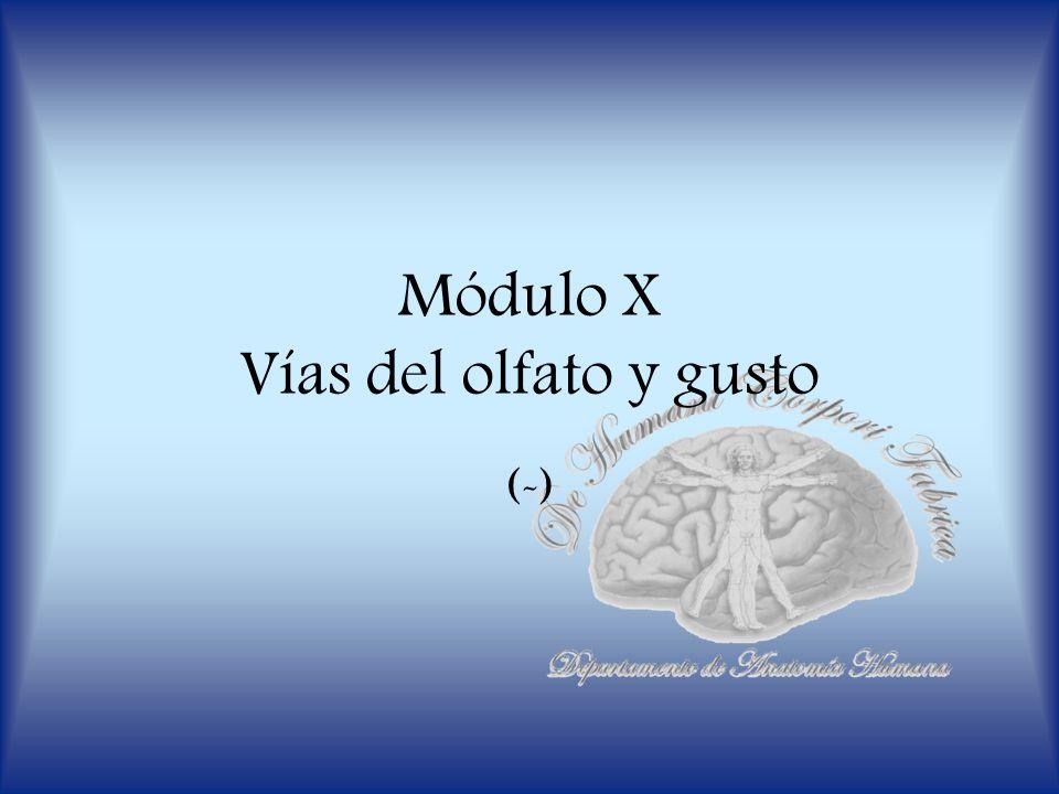 Módulo X Vías del olfato y gusto (-)
