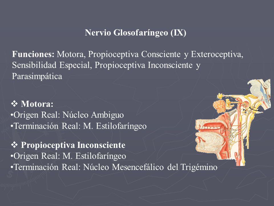 Nervio Glosofaríngeo (IX) Funciones: Motora, Propioceptiva Consciente y Exteroceptiva, Sensibilidad Especial, Propioceptiva Inconsciente y Parasimpáti