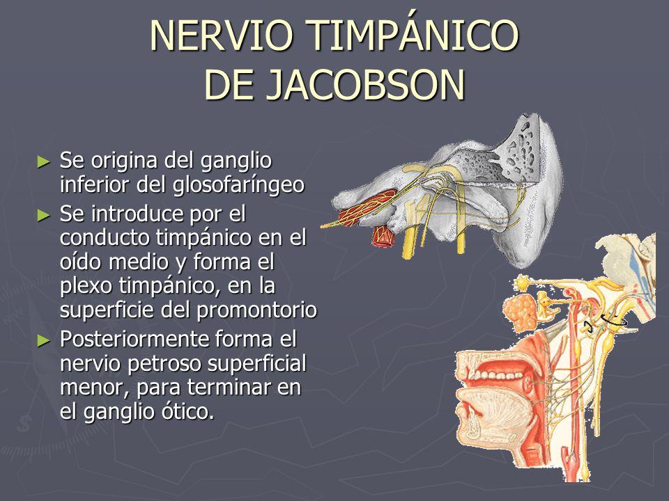 NERVIO TIMPÁNICO DE JACOBSON Se origina del ganglio inferior del glosofaríngeo Se origina del ganglio inferior del glosofaríngeo Se introduce por el c
