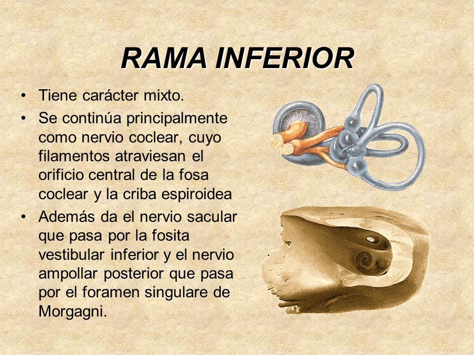 RAMA INFERIOR Tiene carácter mixto.