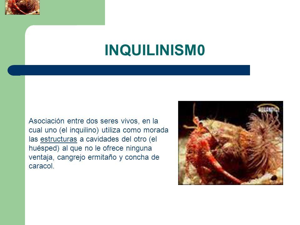 INQUILINISM0 Asociación entre dos seres vivos, en la cual uno (el inquilino) utiliza como morada las estructuras a cavidades del otro (el huésped) al
