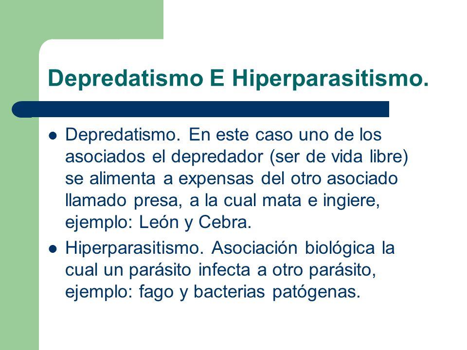 Depredatismo E Hiperparasitismo. Depredatismo. En este caso uno de los asociados el depredador (ser de vida libre) se alimenta a expensas del otro aso