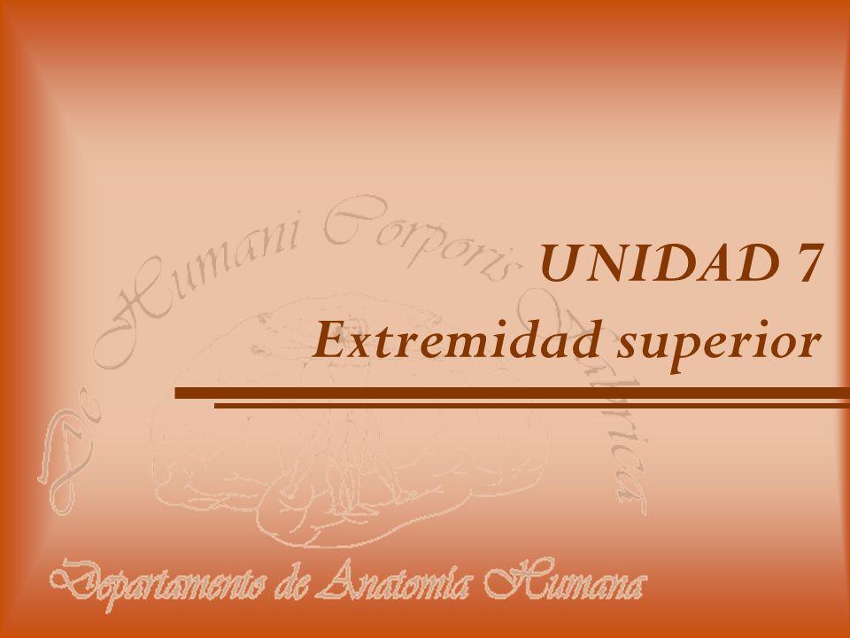 UNIDAD 7 Extremidad superior