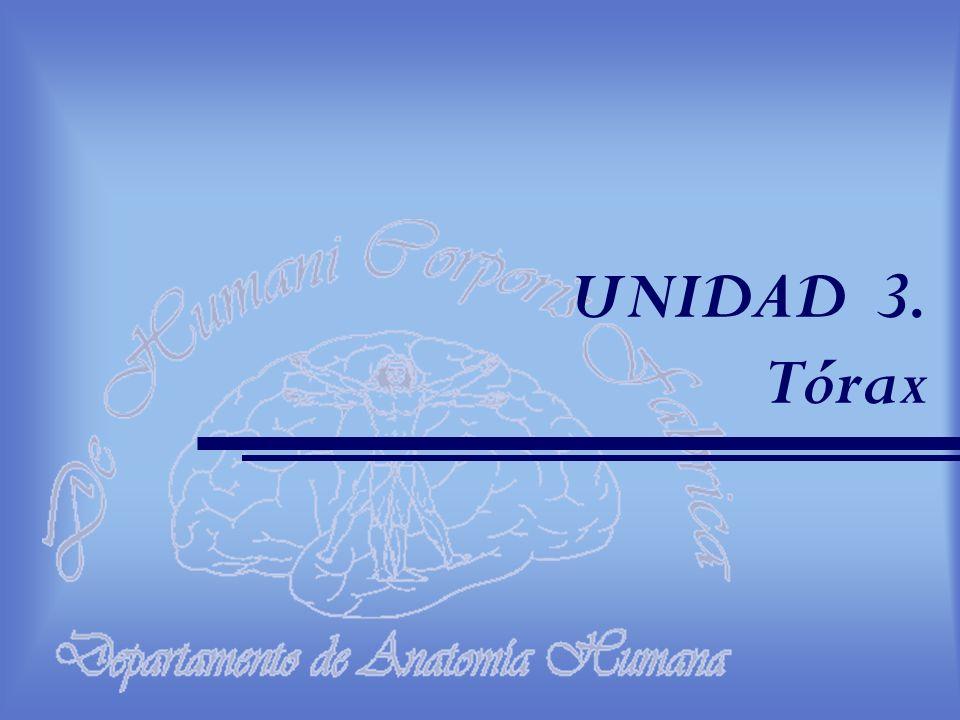 UNIDAD 3. Tórax