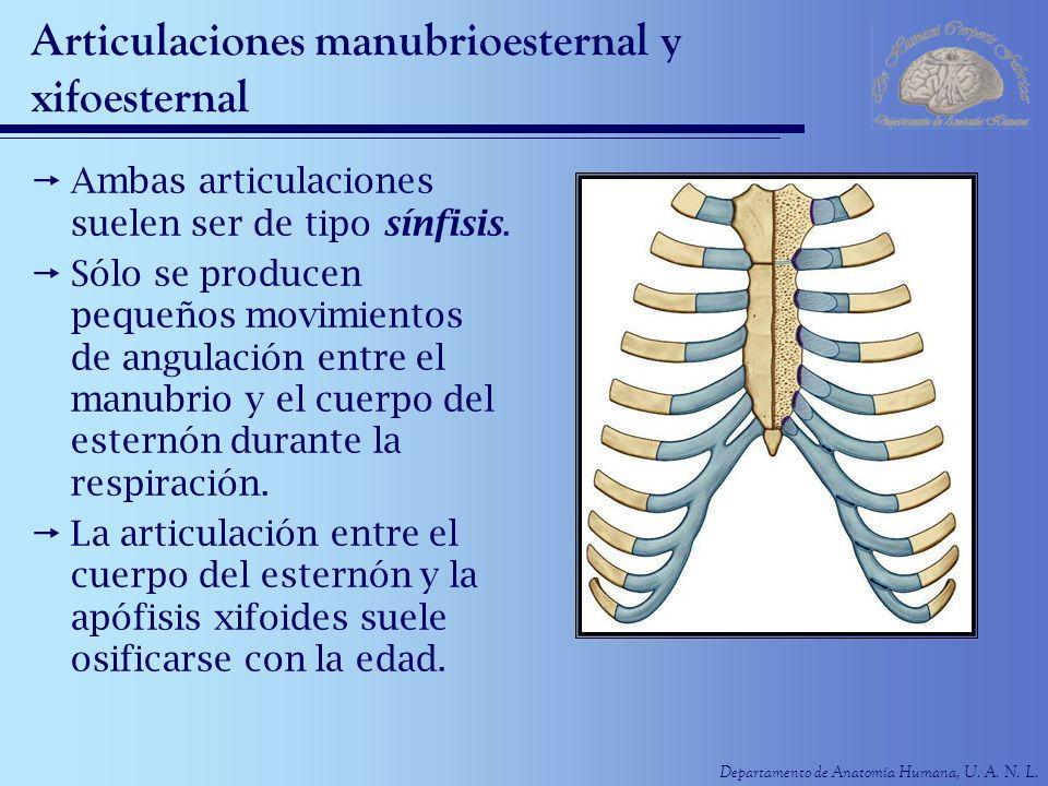 Departamento de Anatomía Humana, U. A. N. L. Articulaciones manubrioesternal y xifoesternal Ambas articulaciones suelen ser de tipo sínfisis. Sólo se