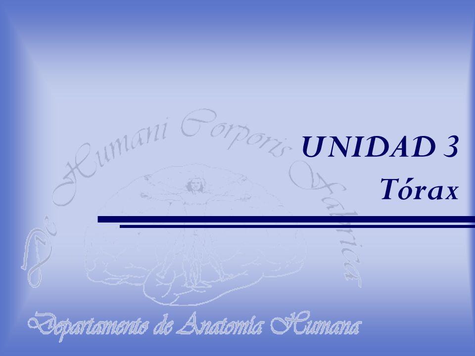 UNIDAD 3 Tórax
