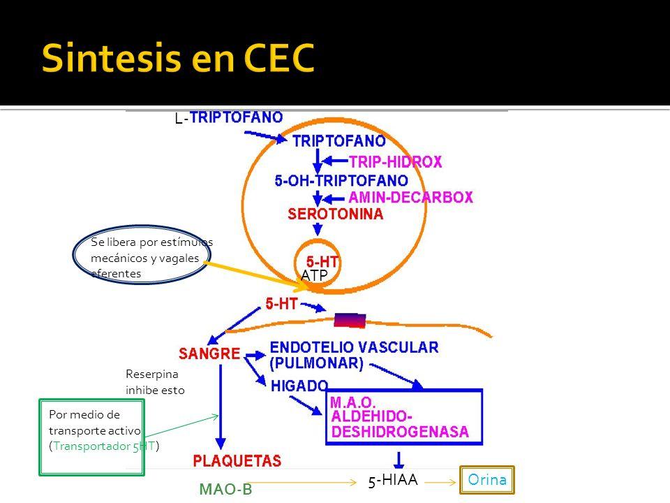 cAMP Aumento DAG y IP3 = aumento calcio Intracelular