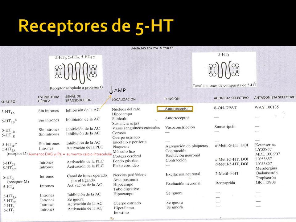 5HT1A Disminuye la rapidez de estimulación de las células del rafe cuando las activa 5HT liberada desde las colaterales axonianas de la misma neurona 5HT1D Regula la liberación de 5HT