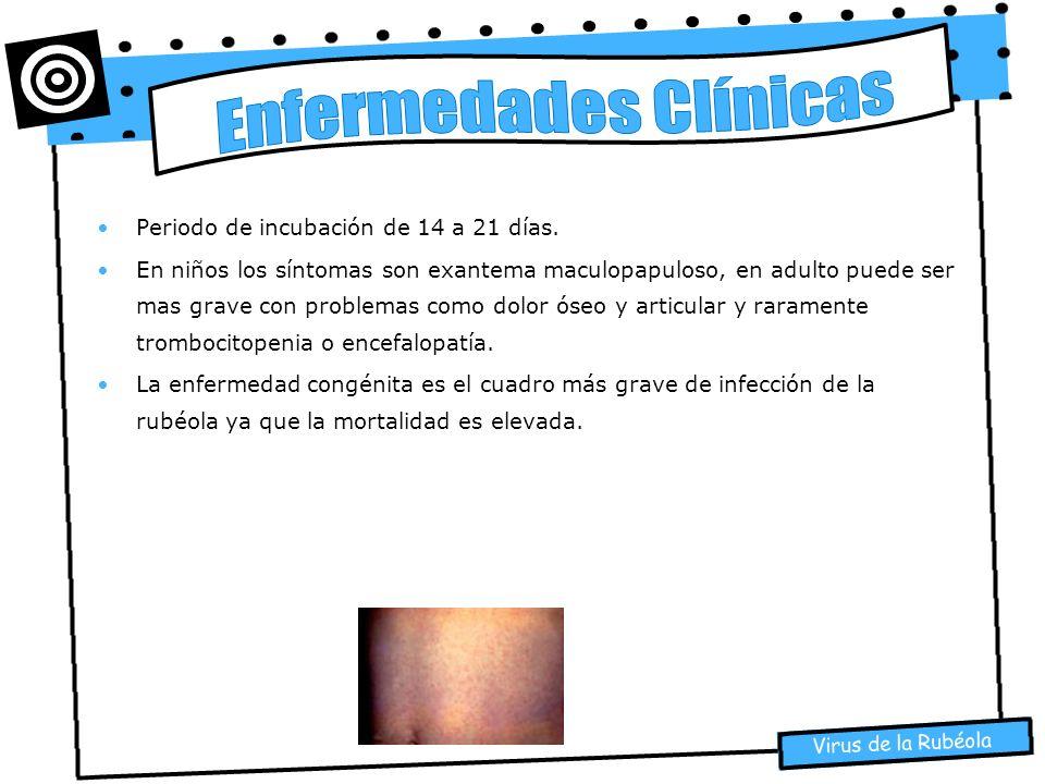 Virus de la Rubéola Periodo de incubación de 14 a 21 días. En niños los síntomas son exantema maculopapuloso, en adulto puede ser mas grave con proble