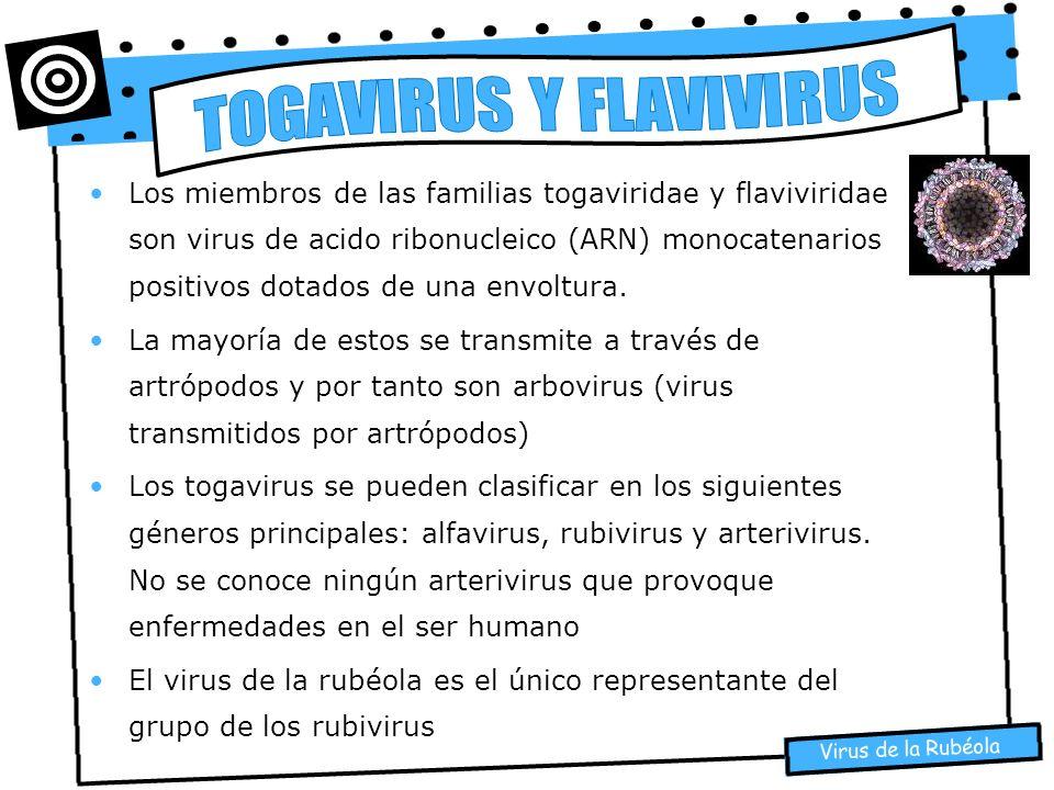 Virus de la Rubéola Los miembros de las familias togaviridae y flaviviridae son virus de acido ribonucleico (ARN) monocatenarios positivos dotados de