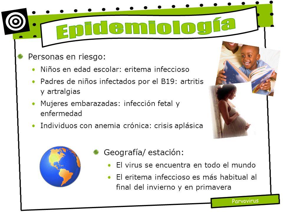 Parvovirus Personas en riesgo: Niños en edad escolar: eritema infeccioso Padres de niños infectados por el B19: artritis y artralgias Mujeres embaraza