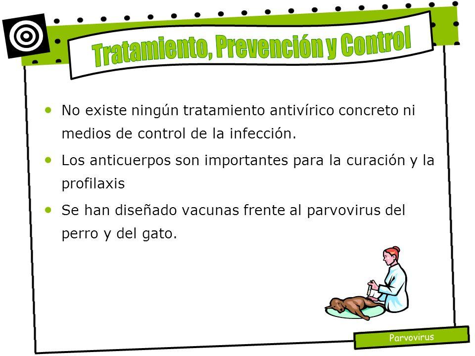 Parvovirus No existe ningún tratamiento antivírico concreto ni medios de control de la infección. Los anticuerpos son importantes para la curación y l