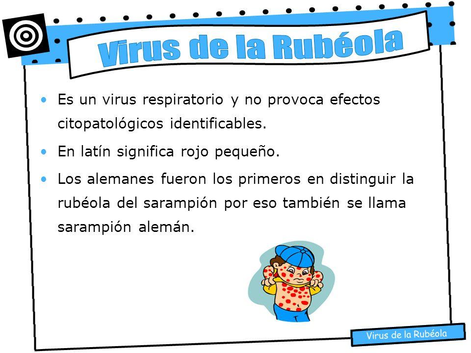 Es un virus respiratorio y no provoca efectos citopatológicos identificables. En latín significa rojo pequeño. Los alemanes fueron los primeros en dis