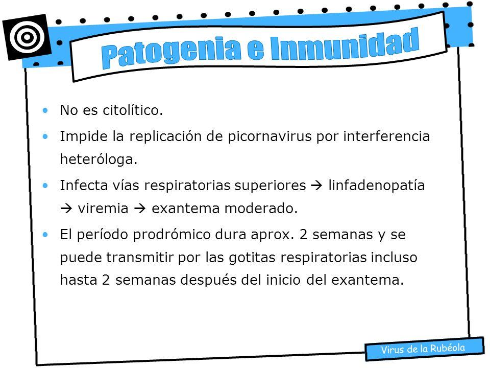 Virus de la Rubéola No es citolítico. Impide la replicación de picornavirus por interferencia heteróloga. Infecta vías respiratorias superiores linfad