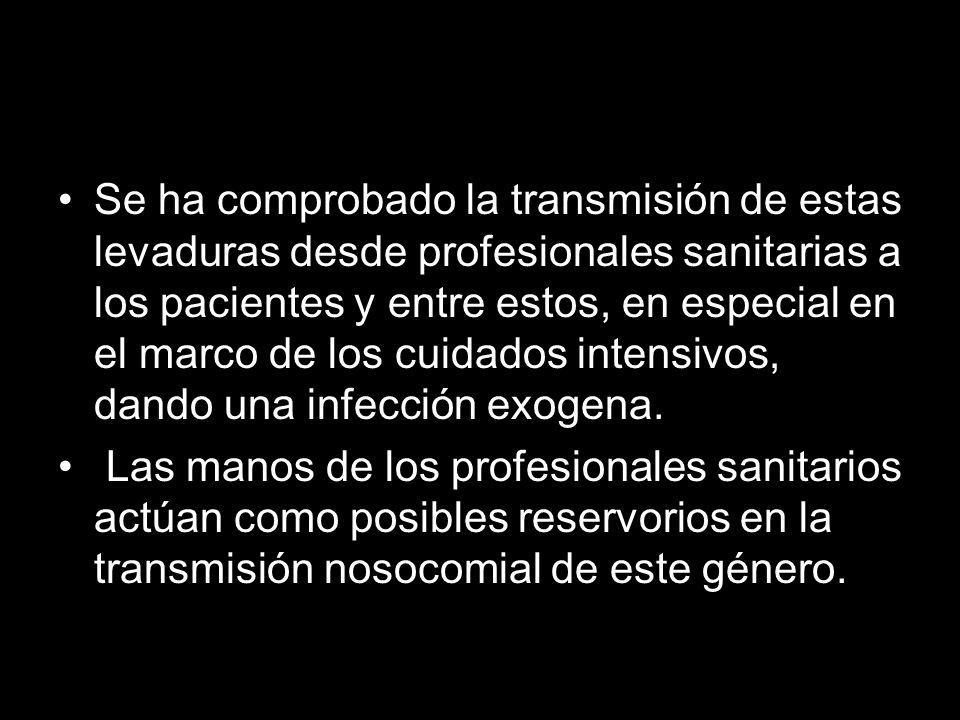 Se ha comprobado la transmisión de estas levaduras desde profesionales sanitarias a los pacientes y entre estos, en especial en el marco de los cuidados intensivos, dando una infección exogena.