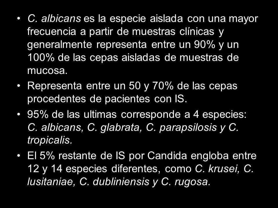 C. albicans es la especie aislada con una mayor frecuencia a partir de muestras clínicas y generalmente representa entre un 90% y un 100% de las cepas