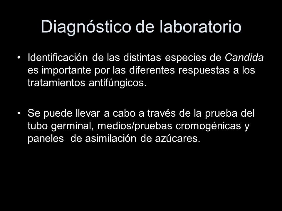 Diagnóstico de laboratorio Identificación de las distintas especies de Candida es importante por las diferentes respuestas a los tratamientos antifúngicos.
