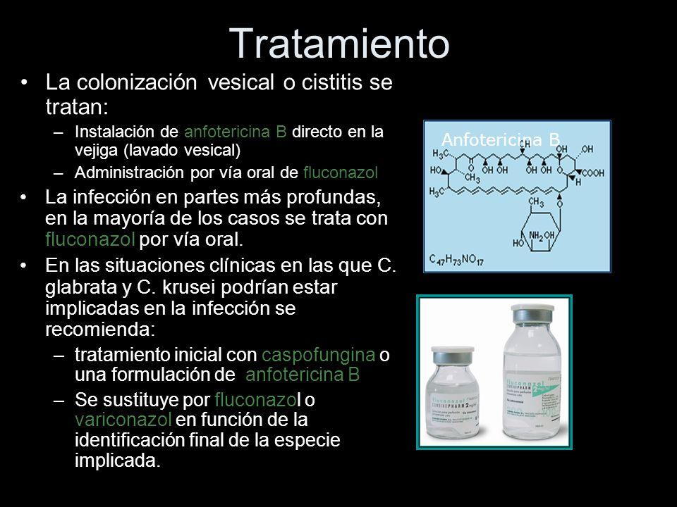 Tratamiento La colonización vesical o cistitis se tratan: –Instalación de anfotericina B directo en la vejiga (lavado vesical) –Administración por vía oral de fluconazol La infección en partes más profundas, en la mayoría de los casos se trata con fluconazol por vía oral.