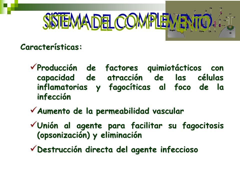 Características: Producción de factores quimiotácticos con capacidad de atracción de las células inflamatorias y fagocíticas al foco de la infección P