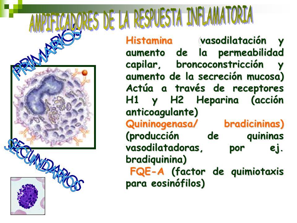 Histamina (vasodilatación y aumento de la permeabilidad capilar, broncoconstricción y aumento de la secreción mucosa) Actúa a través de receptores H1