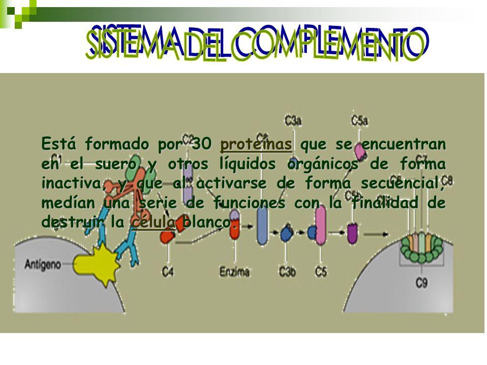 Está formado por 30 proteínas que se encuentran en el suero y otros líquidos orgánicos de forma inactiva, y que al activarse de forma secuencial, medí