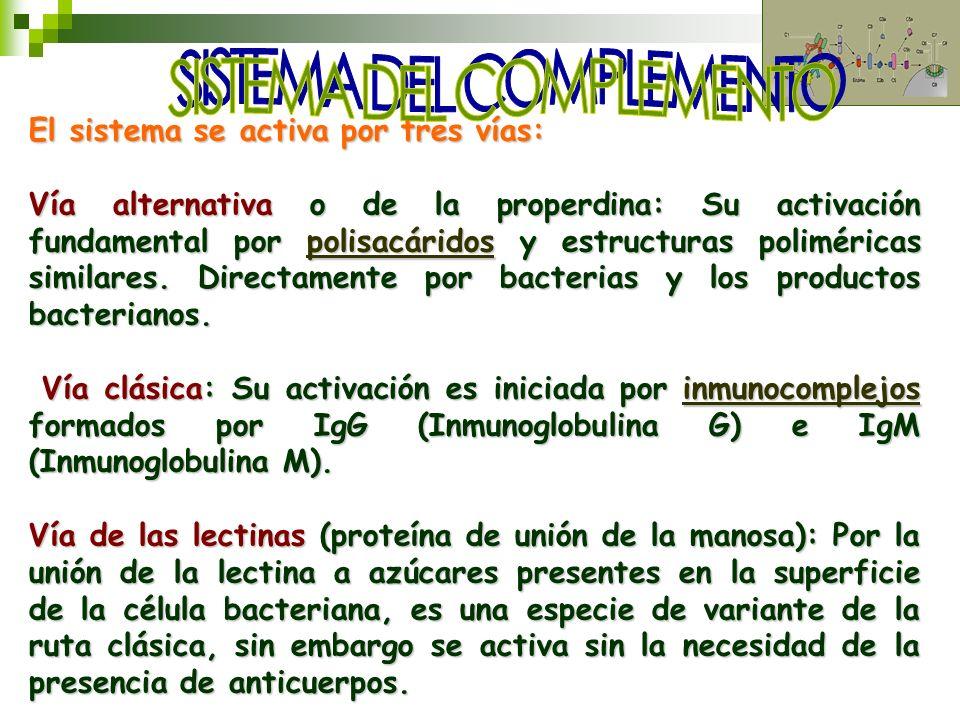 El sistema se activa por tres vías: Vía alternativa o de la properdina: Su activación fundamental por polisacáridos y estructuras poliméricas similare