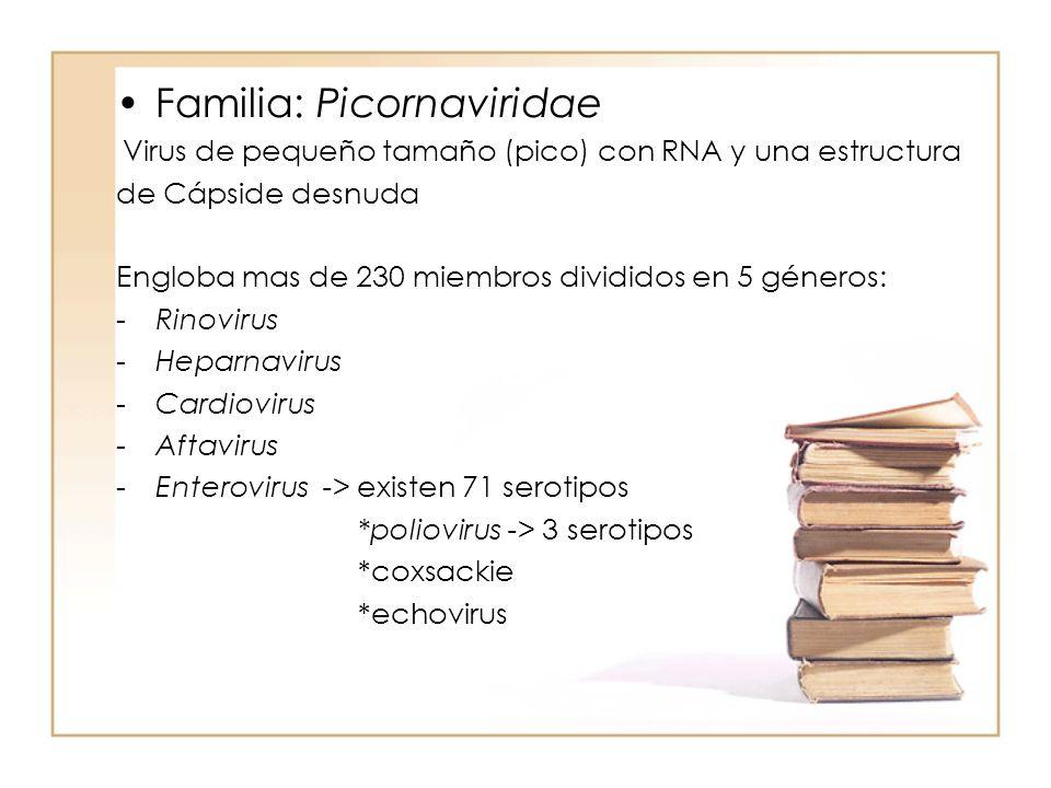 Familia: Picornaviridae Virus de pequeño tamaño (pico) con RNA y una estructura de Cápside desnuda Engloba mas de 230 miembros divididos en 5 géneros:
