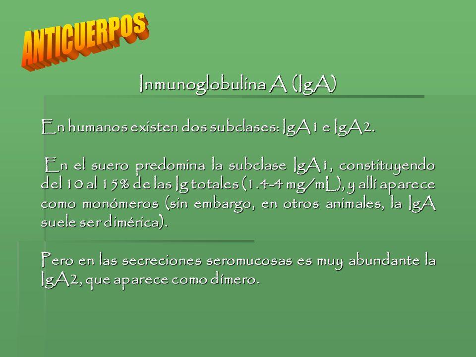 Inmunoglobulina A (IgA) En humanos existen dos subclases: IgA1 e IgA2. En el suero predomina la subclase IgA1, constituyendo del 10 al 15% de las Ig t