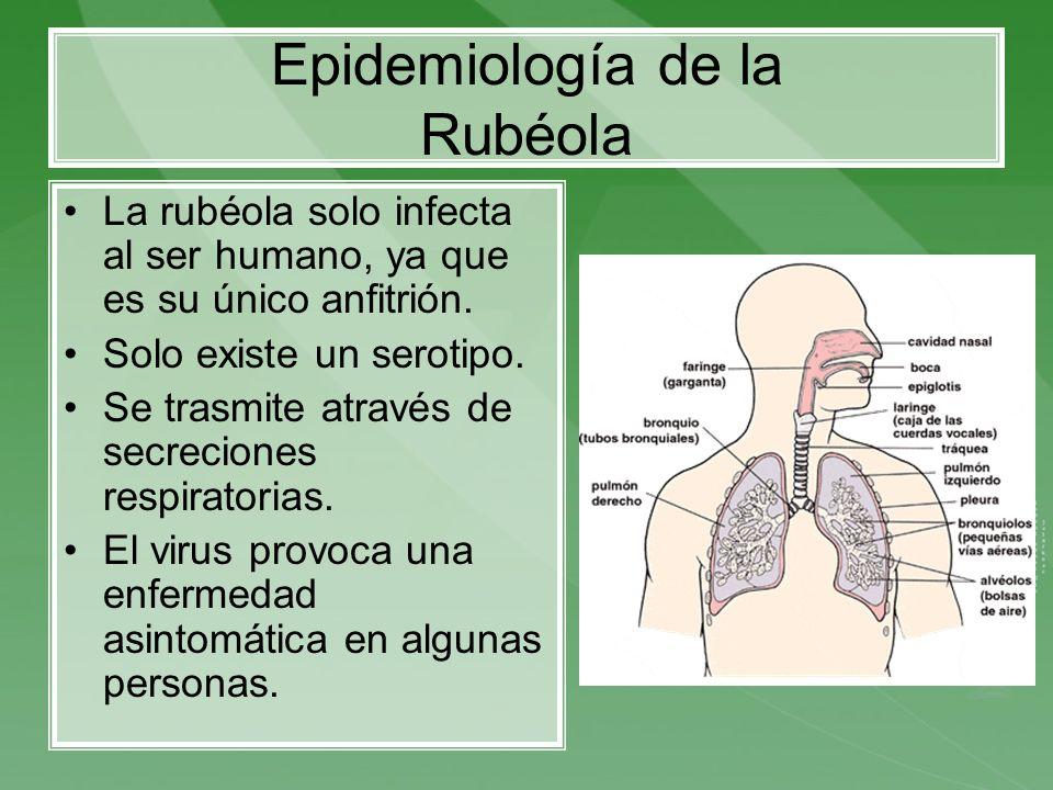 Epidemiología de la Rubéola La rubéola solo infecta al ser humano, ya que es su único anfitrión. Solo existe un serotipo. Se trasmite através de secre