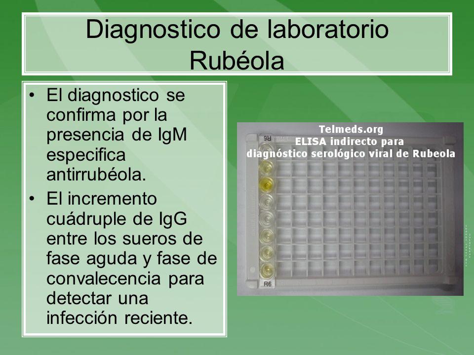 Diagnostico de laboratorio Rubéola El diagnostico se confirma por la presencia de IgM especifica antirrubéola. El incremento cuádruple de IgG entre lo