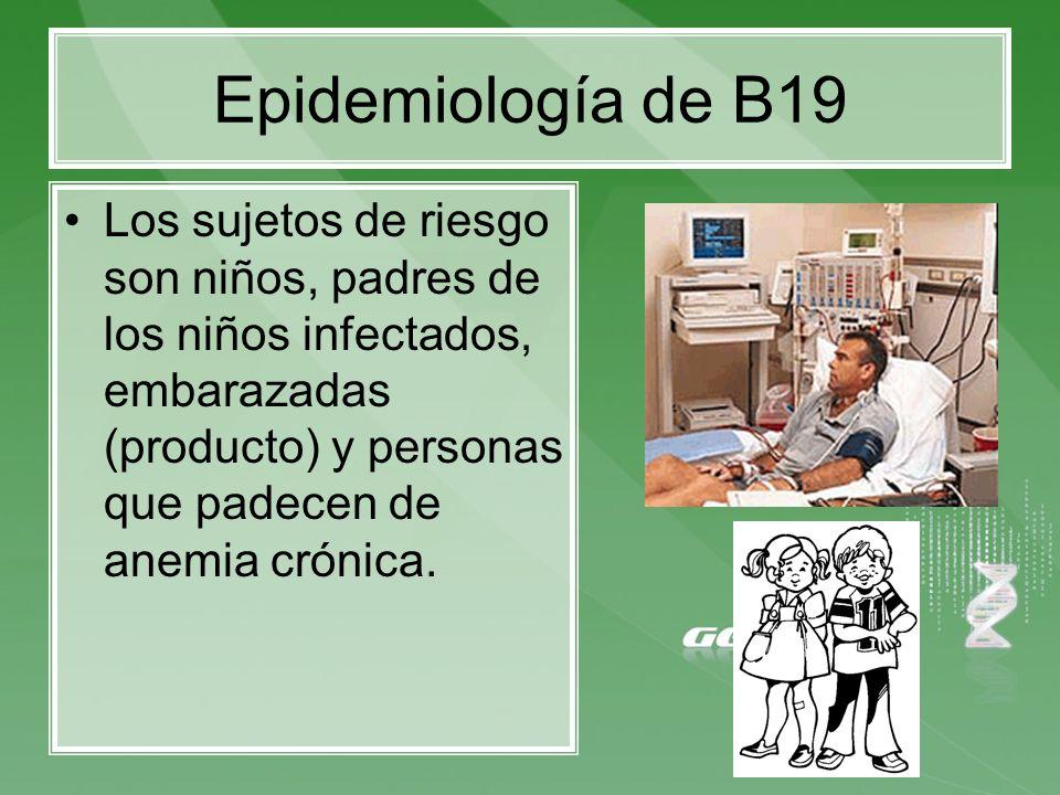 Epidemiología de B19 Los sujetos de riesgo son niños, padres de los niños infectados, embarazadas (producto) y personas que padecen de anemia crónica.