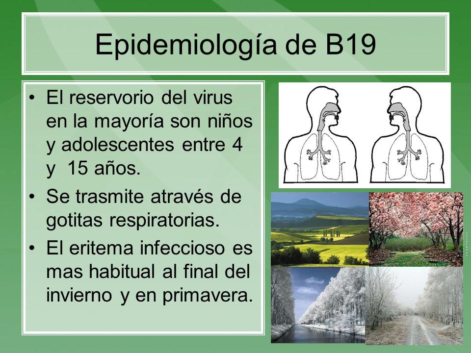 Epidemiología de B19 El reservorio del virus en la mayoría son niños y adolescentes entre 4 y 15 años. Se trasmite através de gotitas respiratorias. E