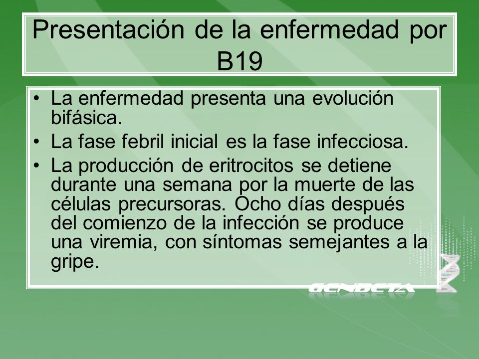 Presentación de la enfermedad por B19 La enfermedad presenta una evolución bifásica. La fase febril inicial es la fase infecciosa. La producción de er