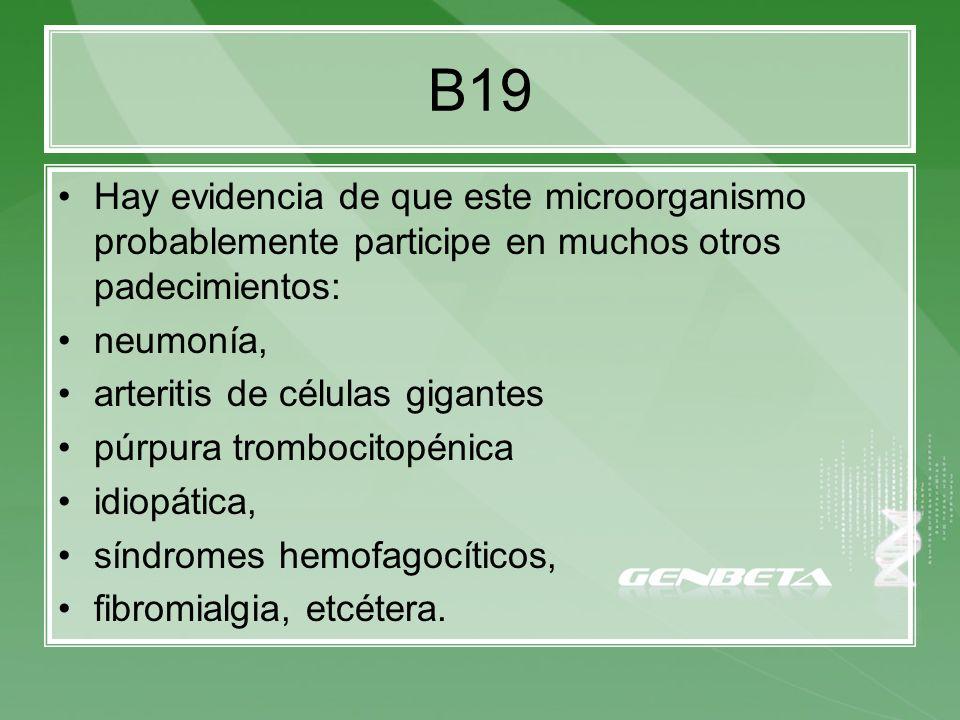 B19 Hay evidencia de que este microorganismo probablemente participe en muchos otros padecimientos: neumonía, arteritis de células gigantes púrpura tr