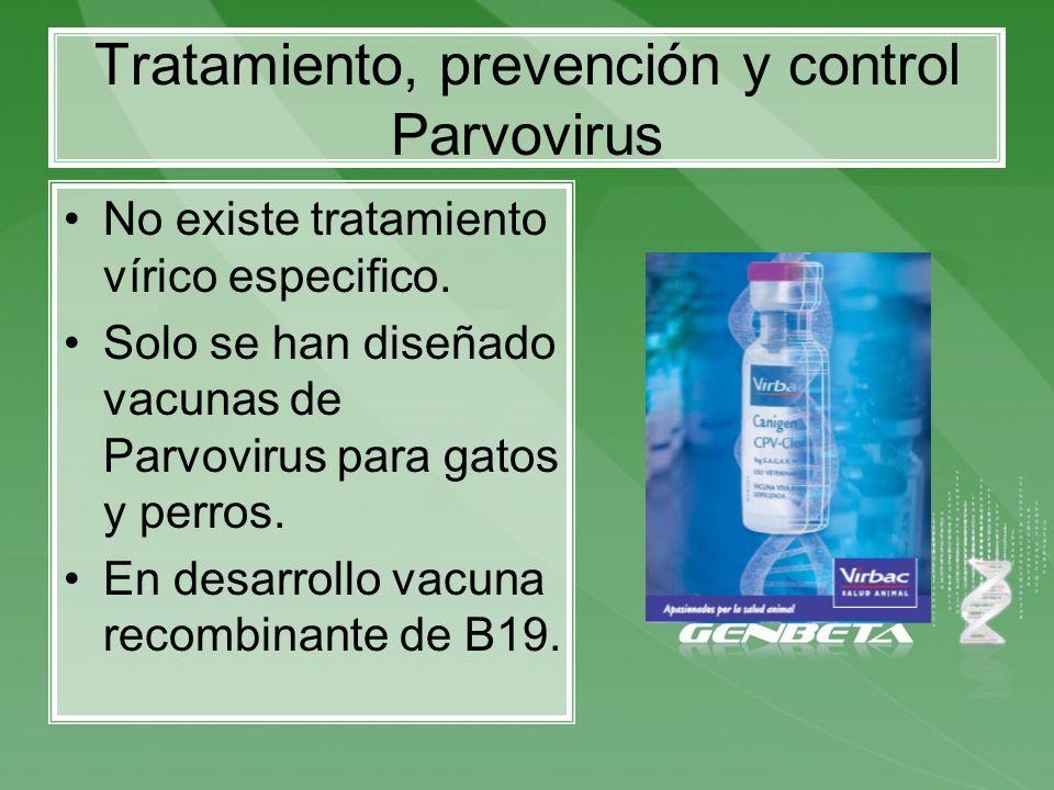 Tratamiento, prevención y control Parvovirus No existe tratamiento vírico especifico. Solo se han diseñado vacunas de Parvovirus para gatos y perros.