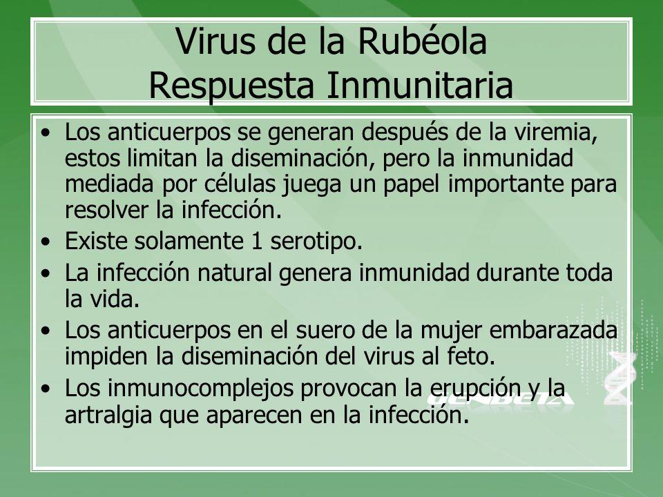 Virus de la Rubéola Respuesta Inmunitaria Los anticuerpos se generan después de la viremia, estos limitan la diseminación, pero la inmunidad mediada p