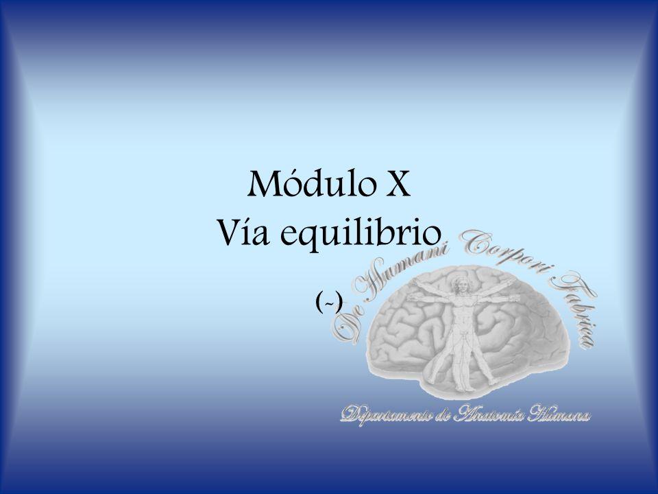 Módulo X Vía equilibrio (-)
