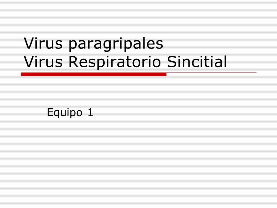 Virus paragripales Virus Respiratorio Sincitial Equipo 1