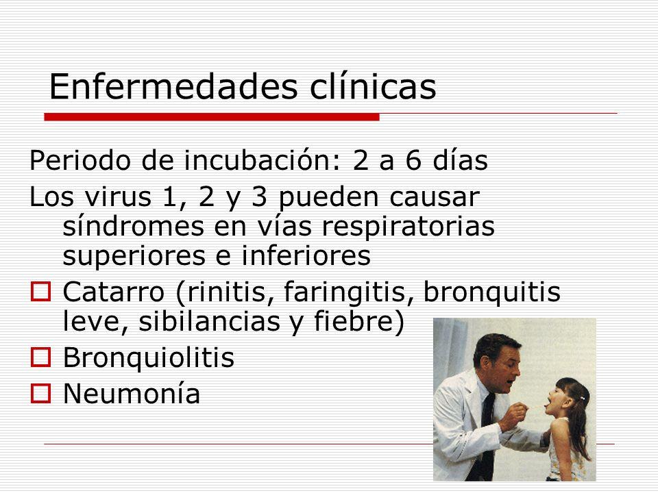 Enfermedades clínicas Periodo de incubación: 2 a 6 días Los virus 1, 2 y 3 pueden causar síndromes en vías respiratorias superiores e inferiores Catar