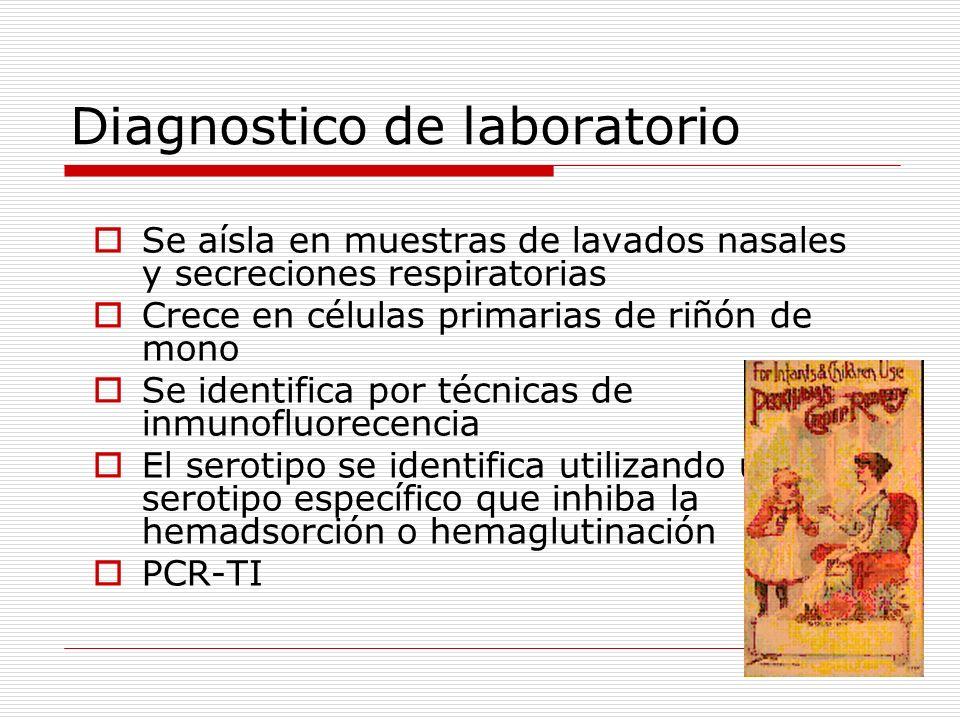 Diagnostico de laboratorio Se aísla en muestras de lavados nasales y secreciones respiratorias Crece en células primarias de riñón de mono Se identifi