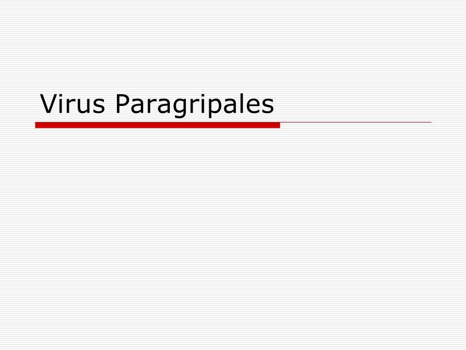 Virus Paragripales
