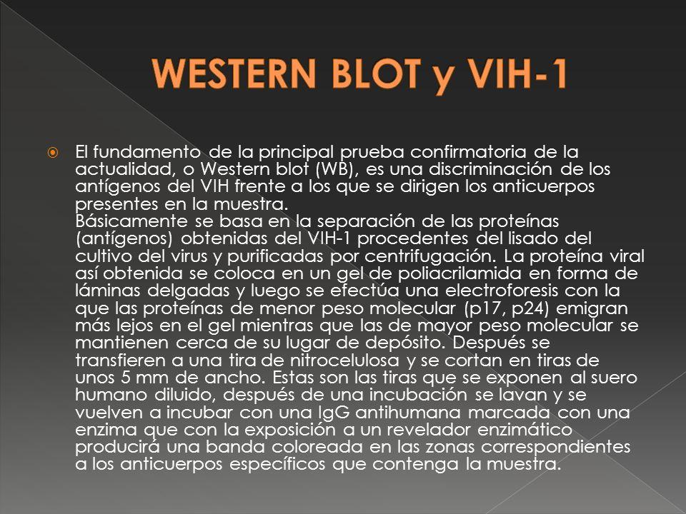 El fundamento de la principal prueba confirmatoria de la actualidad, o Western blot (WB), es una discriminación de los antígenos del VIH frente a los